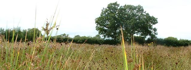 Grassland Habitat