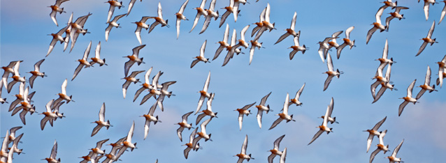 Gullwits Migration Ecological Impact Assessment (EIA)