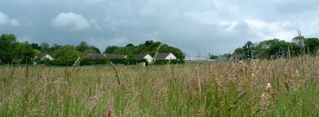 Habitat Grassland Management