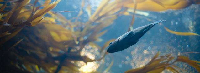 Marine - sealife