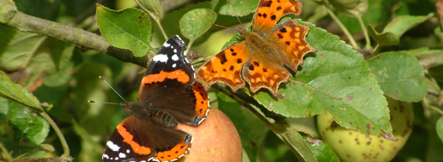Rebecca Coombes - butterflies