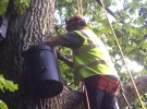 Bat and Red Squirrel Mitigation, Aberdeen
